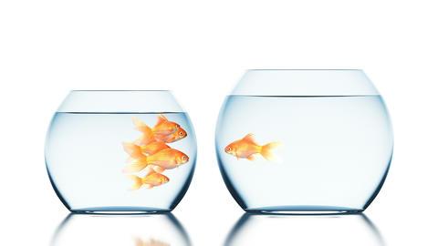 Brave Goldfish Jumps into the Bigger and Uninhabited Aquarium Animation