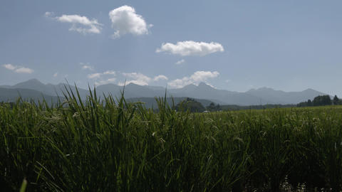 Ricefield 20190825 0009 Live Action