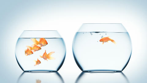 Goldfish Jumps into Another Fishbowl Animation