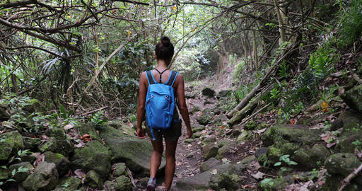 Hawaii travel tourist hiking in rainforest in the rain on Pololu Valley hike Live Action