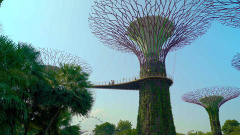Gardens by the Bay SuperTree Grove Dolly Move Live Action
