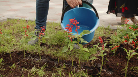 Woman pouring water from bucket on flower bed after planting. Gardener watering Live Action