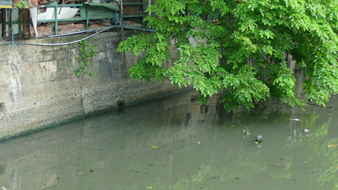 Cat dead in the canal 2 Footage