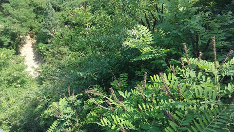 Landscape Of Mountain And Forest 2