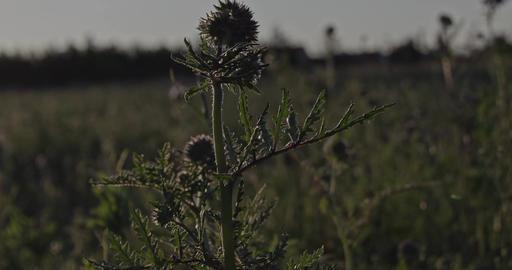 Grassy Meadow 0