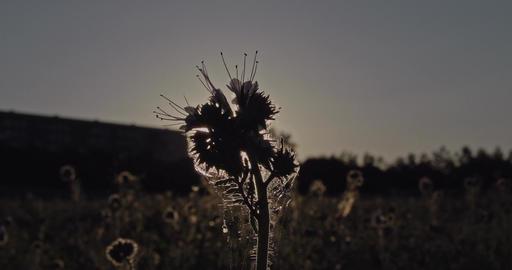 Grassy Meadow 1