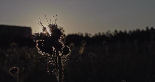 Grassy Meadow 2