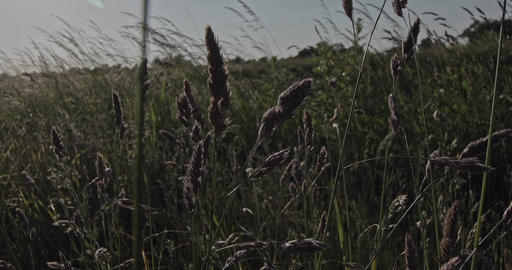 A slow motion shot through blades of grass on a meadow at the countryside Live Action