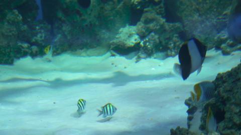 Sharks swim in a large aquarium 009 Live Action