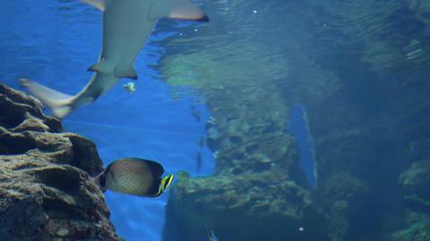 Sharks swim in a large aquarium 010 Live Action