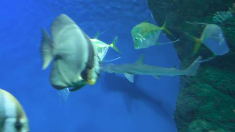 Sharks swim in a large aquarium 012 Live Action