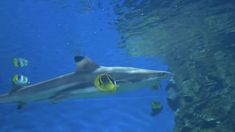 Sharks swim in a large aquarium 007 Live Action