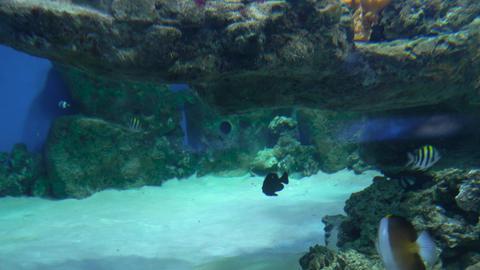 Sharks swim in a large aquarium 008 Live Action
