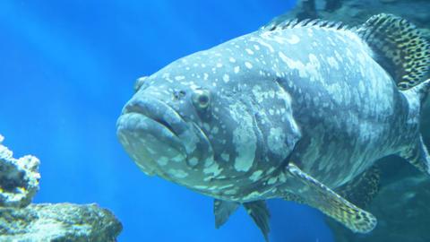 Sea fish swim in a large aquarium 001 Live Action