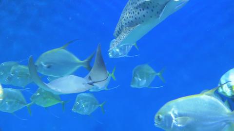 Sea fish swim in a large aquarium 004 Live Action