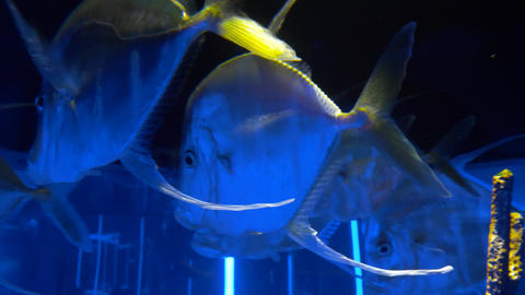Sea fish swim in a large aquarium 006 Live Action