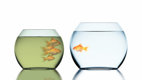 Goldfish Jumps into the Clean Fishbowl Animation