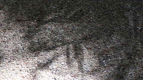 Abstract nature. Shadow of monastery bamboo leaves on gravel floor Footage