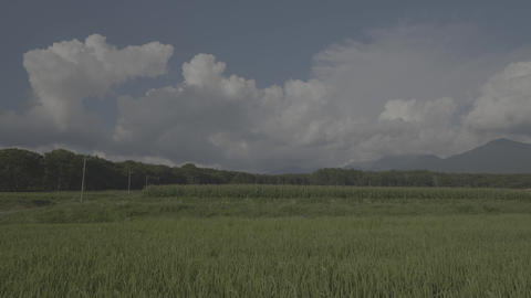 Mountain of Yatsugatake & rice Live Action