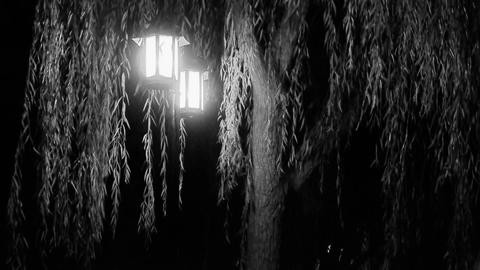 willow tree & street lights at quiet night.black... Stock Video Footage