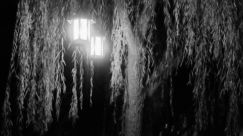willow tree & street lights at quiet night.black & white style Footage