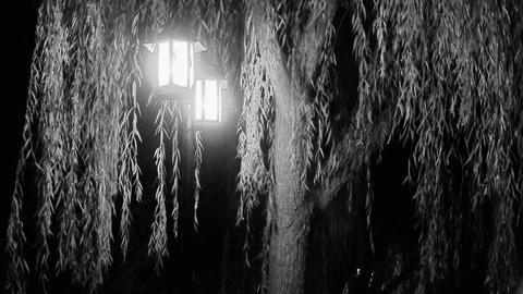 willow tree & street lights at quiet night.black... Stock Video Footage