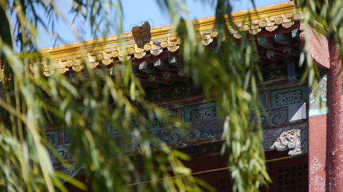willow shaking in wind at the Forbidden City.Chinese ancient buildings & red Footage