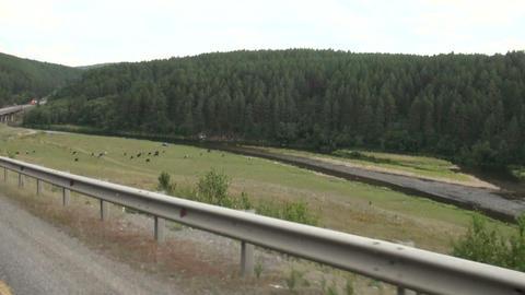 wood road Stock Video Footage