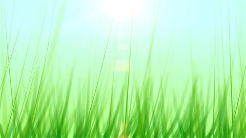 BG GRASS 001 25fps Stock Video Footage