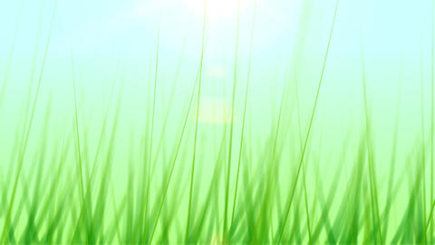 BG GRASS 001 25fps Animation