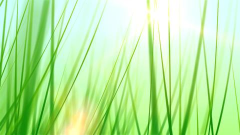 BG GRASS 002 24fps Stock Video Footage