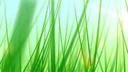 BG GRASS 002 24fps Stock Video Footage