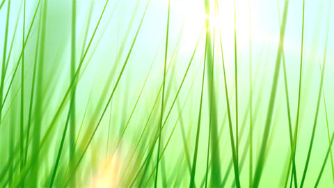 BG GRASS 002 30fps Stock Video Footage