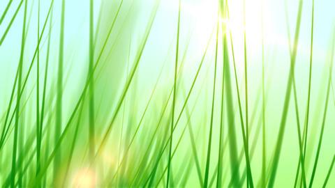 BG GRASS 002 30fps Stock Video Footage