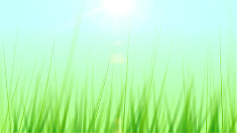 BG GRASS 003 25fps Stock Video Footage