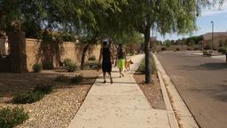 Young Couple Walks their Dogs on Typical Arizona Neighborhood Sidewalk Footage