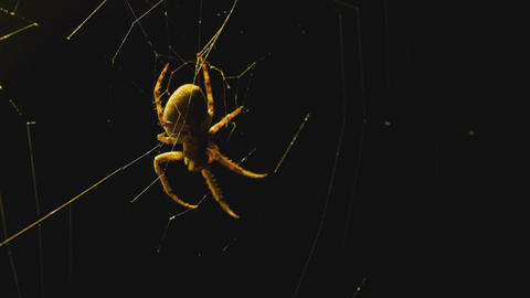 The spider weaves a web of near lantern Live Action