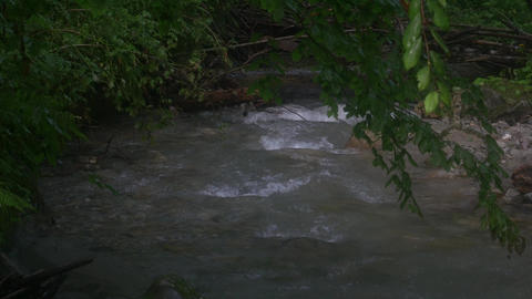 Mountain Stream in Green Forest Live Action