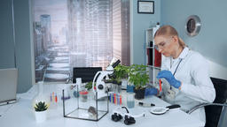 In modern research lab scientist in safety glasses adding liquid to the plant in Footage
