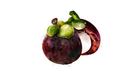 Watercolor appearance animation of the mangosteen on the alpha channel Animation