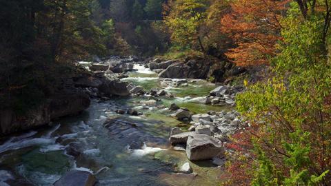 長野県 赤沢自然休養林 Footage