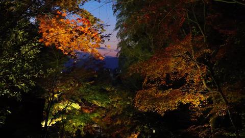 ライトアップされた美しい紅葉 ライブ動画