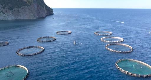 Aquaculture Aerial View Live Action