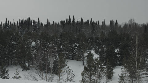 Panoramic view of the taiga forests of pine trees.Siberian taiga.Winter forest Live Action