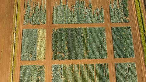 Aerial view of farmland Footage