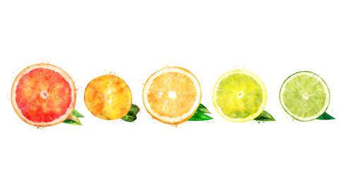 Grapefruit, mandarin, orange, citrus, lemon and lime on the alpha channel CG動画