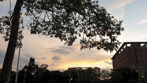 sunset,tree,city Live Action