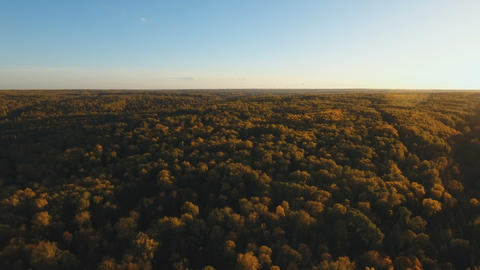 Autumn forest,aerial view Footage