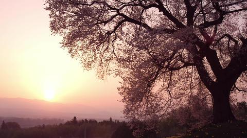 日の出(サンライズ) ビデオ