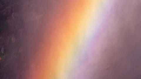 長野県山ノ内町 地獄谷野猿公苑(地獄谷温泉) ライブ動画